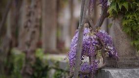 Glicinia del árbol floreciente en Montenegro, el Adriático y el obstáculo almacen de metraje de vídeo