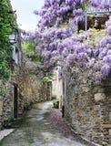 Glicinia floreciente en la calle del pueblo francés Foto de archivo libre de regalías