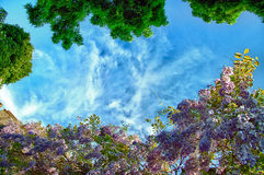 Glicinias florecientes fotografía de archivo