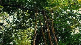 Glida under Rainforestväxter och träd lager videofilmer