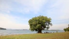 glidare för docka 4K trädet nära natursjön med det blåsiga slaget arkivfilmer