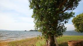 glidare för docka 4K trädet nära natursjön med det blåsiga slaget lager videofilmer