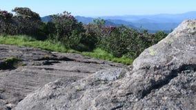 glidbanan som 4k är höger från rhododendron till behind, vaggar stock video