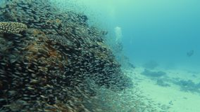 Gliding around a coral reef with a school of fish. A gliding shot of a coral reef that is surrounded by a school of fish. A diver is swimming on the other side stock footage