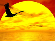 Gliding Eagle. Eagle easily flying silhouetted against the setting sun Stock Photography