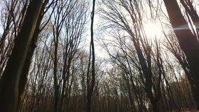 Gliding through the forest stock footage