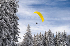 Gliding over the forest. Paragliding over the winter forest Royalty Free Stock Photos