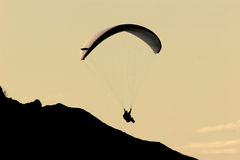 Gliding in the Twilight stock photography