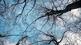 Gliding Under Trees And Sky. Tracking shot looking up at sky and trees in forest stock video footage