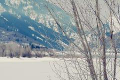 Glieder von Bäumen in den Nord-Utah-Bergen im Winter Stockfotografie