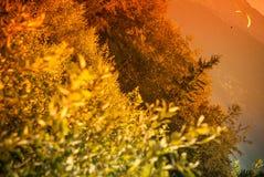 Glijscherm die bij Zar Berg Bielsko vliegen Stock Foto's