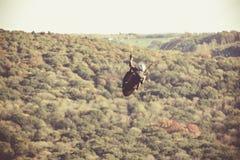 Glijscherm die boven Belgisch platteland vliegen Royalty-vrije Stock Foto's