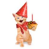 Glimlachend kat/katje, gelukkige geïsoleerde verjaardag Stock Foto