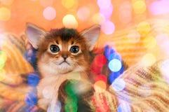 Glimlachend katje Stock Foto's