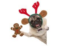 Glimlachend Kerstmispug hond die de peperkoekmens steunen en de hoofdband van rendiergeweitakken, met poot op witte banner dragen royalty-vrije stock afbeeldingen