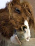 Glimlachend paard Stock Afbeeldingen