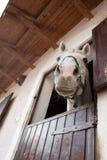 Glimlachend paard royalty-vrije stock foto