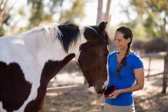 Glimlachend vrouwelijk jockey het schoonmaken paard stock afbeeldingen