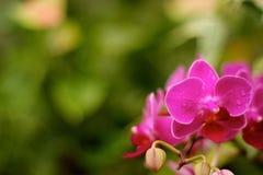 Glimlachende bloem Stock Afbeeldingen