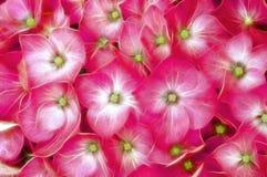 Glimlachende Bloemen royalty-vrije stock afbeeldingen