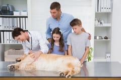 Glimlachende dierenarts die een hond met zijn doen schrikken eigenaars onderzoeken Stock Fotografie