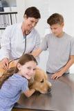 Glimlachende dierenarts die een hond met zijn eigenaars onderzoeken Stock Afbeeldingen