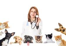 Glimlachende dierenarts en hond en kat stock foto