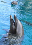 Glimlachende dolfijn Royalty-vrije Stock Foto