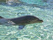 Glimlachende dolfijn Royalty-vrije Stock Foto's