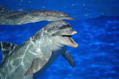 Glimlachende Dolfijn Stock Foto's