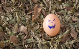 Glimlachende eieren Stock Fotografie