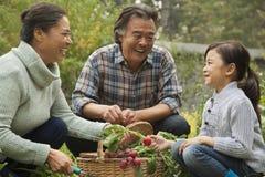 Glimlachende grootouders en kleindochter in tuin het plukken groenten royalty-vrije stock foto's