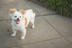 Glimlachende hond Royalty-vrije Stock Fotografie