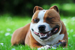 Glimlachende hond royalty-vrije stock afbeelding