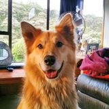 Glimlachende hond Royalty-vrije Stock Foto's
