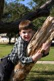 Glimlachende jongen op boomtak Stock Foto