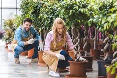 Glimlachende tuinlieden die met schoppen bomen planten Royalty-vrije Stock Foto's
