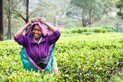 Glimlachende vrouw die aan de theeaanplanting van Sri Lankan werken Royalty-vrije Stock Afbeeldingen