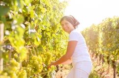 Glimlachende vrouw die op middelbare leeftijd in een wijngaard werken stock afbeeldingen