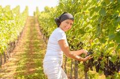 Glimlachende vrouw die op middelbare leeftijd in een wijngaard werken royalty-vrije stock fotografie