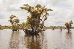 Laguna Grande -  Cuyabeno Wildlife Reserve Stock Image