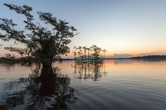 Laguna Grande -  Cuyabeno Wildlife Reserve Royalty Free Stock Photos