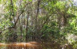 Dense Vegetation On Cuyabeno River  Royalty Free Stock Photography