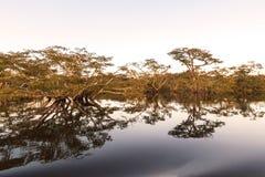 Laguna Grande -  Cuyabeno Wildlife Reserve Stock Photography