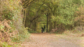 Glimpse of a dog walker in the autumn forest Stock Images