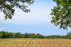 Glimpse on a mown hayfield. On a summer day Stock Photos