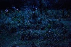 Glimworm die in het bos bij nacht in Prachinburi Thailand vliegen Lange blootstellingstechniek Stock Afbeeldingen