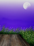 Glimworm en grasvolle maan Stock Fotografie