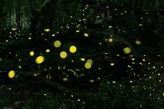 Glimwormen bij bos dichtbij Burgas-stad, Bulgarije Stock Fotografie