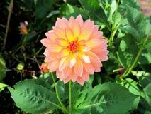 Glina kwiaty Obrazy Stock